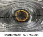 growth ring | Shutterstock . vector #573759301