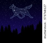 vector illustration of a night sky with the constellation of the Great Dog. Canis Major. Star wolf. Night landscape with starry sky and silhouettes of spruce trees.
