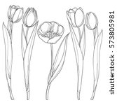 vector set with outline tulips... | Shutterstock .eps vector #573805981