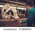 young farmer feeding cow in the ... | Shutterstock . vector #573808051