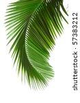 Green Palm Tree On White...