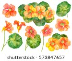 watercolor set of floral... | Shutterstock . vector #573847657