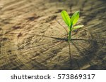 new life idea concept with... | Shutterstock . vector #573869317