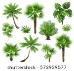 tropical plants  coconut palm ... | Shutterstock .eps vector #573929077