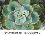 Close Up Macro Succulent Plant...