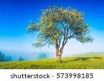 Lonely Flowering Apple Tree On...