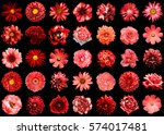 mega pack of natural and... | Shutterstock . vector #574017481