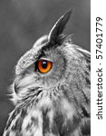 Portrait Of A Great Eagle Owl ...