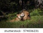 Lions In Harmony