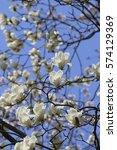 white flowers closeup of a... | Shutterstock . vector #574129369