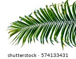 palm leaf isolated on white...   Shutterstock . vector #574133431