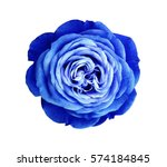 Blue White Rose Flower. White...