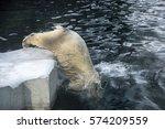 beautiful young polar bear... | Shutterstock . vector #574209559