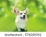 Happy Dog Welsh Corgi Pembroke...