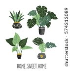 house plants with big leaves.... | Shutterstock .eps vector #574313089