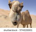 Camel Smiling
