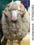 portrait of white ram  soviet... | Shutterstock . vector #574362481
