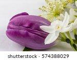 closeup on purple tulip white...   Shutterstock . vector #574388029