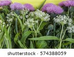 wild white small inflorescence...   Shutterstock . vector #574388059