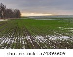 agricultural field with rows of ...   Shutterstock . vector #574396609