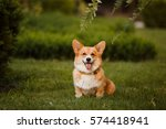 the corgi dog sitting on the...   Shutterstock . vector #574418941
