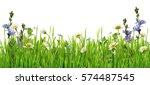 Grass And Daisy Flowers Row...