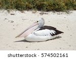 Large Black And White Pelican...