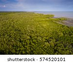 Small photo of Mangrove (Rhizophora aciculate Blume) swamp at Samut Sakhon, Upper Gulf of Thailand