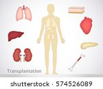 transplantation. the most... | Shutterstock .eps vector #574526089