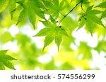 leaves of fresh green. leaves... | Shutterstock . vector #574556299