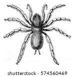 pioneer mygale  vintage...   Shutterstock . vector #574560469