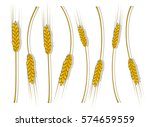 spikes of wheat  barley or rye...   Shutterstock .eps vector #574659559