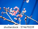 giant tiger flower or pink wild ... | Shutterstock . vector #574670239