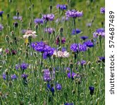 Summer Flowering Meadow With...