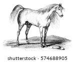 arab horse  vintage engraved... | Shutterstock . vector #574688905