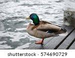 Soft Focus Mallard Ducks At Th...