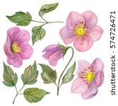 watercolor set of rosehip... | Shutterstock . vector #574726471