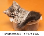 Stock photo playful kitten spoiled at home 574751137