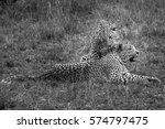 Leopard Licking Cub