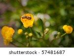 striped bee crawling on yellow