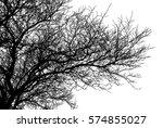realistic tree silhouette ... | Shutterstock .eps vector #574855027