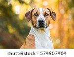 Happy Half Breed Dog  Beagle
