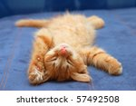 Stock photo kitten sleeps on the back like a log 57492508