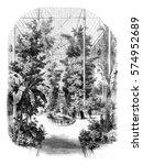 view taken in the greenhouses... | Shutterstock . vector #574952689