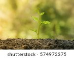 Agriculture. Plant Seedling. A...