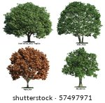 set of four trees isolated... | Shutterstock . vector #57497971