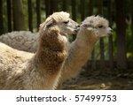 two alpacas | Shutterstock . vector #57499753