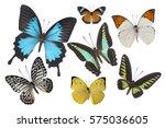 Beautiful Butterfly Wing...