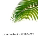 palm leaf isolated on white... | Shutterstock . vector #575064625