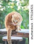 Orange Cat Sitting On The Table ...